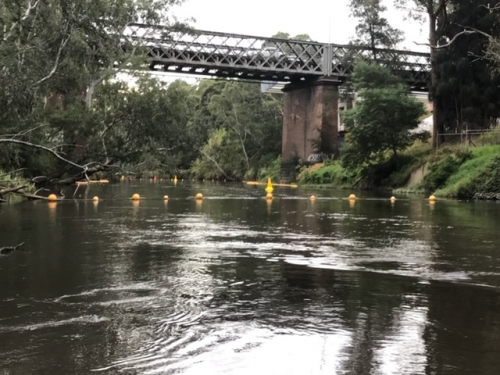Exclusion zone stand up buoy and floating barrier buoys deployed on the Yarra River.